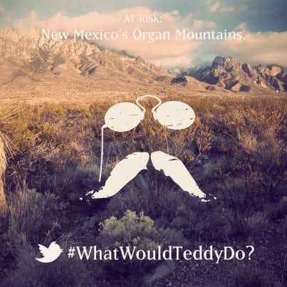 #WhatWouldTeddyDo?